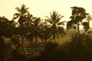 Bali COMO Uma Ubud - rice terraces