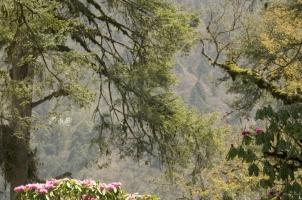 Amankora Bumthang - Flora