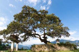Bhutan - Six Senses Punakha