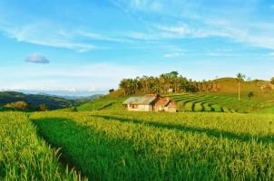 Bali - Ubud rice paddy