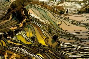 China - Hani rice terraces