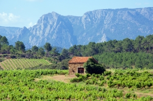 France - Vineyards and Mountains