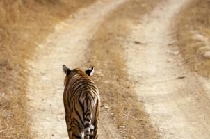 India - Ranthambore National Park