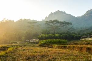 Indonesia - Paddy Fields