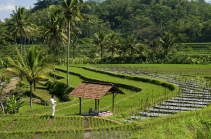 Indonesia - Local Rice fields picnic