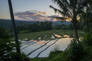 Indonesia - paddy field during treking