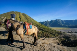 Indonesia - Horse and Mt. Bromo