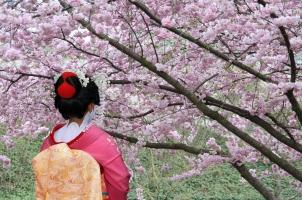 Japan - Geisha Sakura Tree