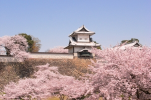 Japan - Castle & Sakura in Kanazawa