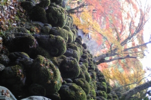 Japan - Kyoto Secret Temple in Arashiyama