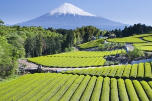 Japan - Mount Fuji Landscape