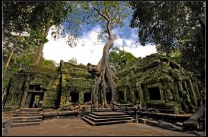 Cambodia - Siem Reap Ta Prohm