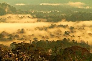 Malaysia - Danum Valley National Park Borneo