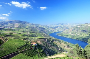 Portugal - Vineyard in Douro valley