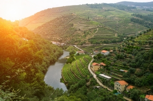 Portugal - view of river and the vineyards