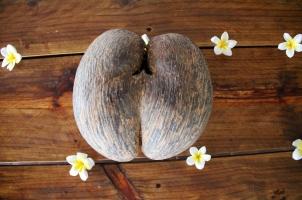 Seychelles - coconut