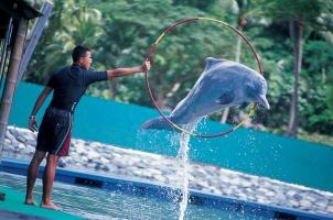 Singapore - Sentosa - Dolphin Lagoon