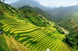 Vietnam - Rice field Mu Cang Chai