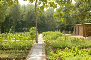 Aman-I-Khas - Organic Garden