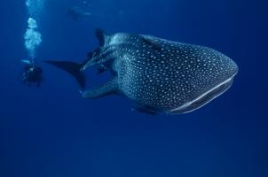 Indonesia Alila Purnama - Under Water