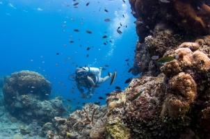 Bawah Reserve - Coral Reef Diving