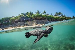 Nihi Sumba - Turtle Release