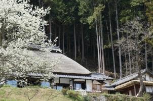 Sasayuri Ann - Villa