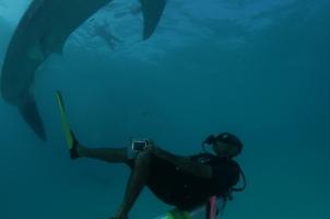 Maledives Four Seasons Explorer - Diving