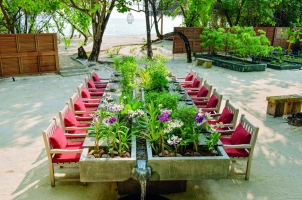 Kanuhura Maldives - Chef's Herb