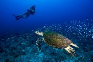 Seychelles North Islands - Scuba Diving