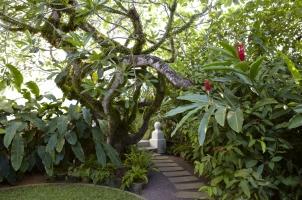 Amangalla -  Galla Garden