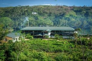 Ceylon Tea Trails - Tea Factory