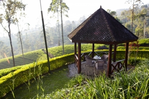 Ceylon Tea Trails - Summerhouse Norwood