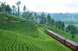 Ceylon Tea Trails - Train Rice Fields