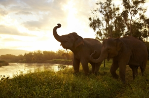 Anantara Golden Triangle - elephant by the river