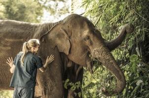 Anantara Golden Triangle - Elephant