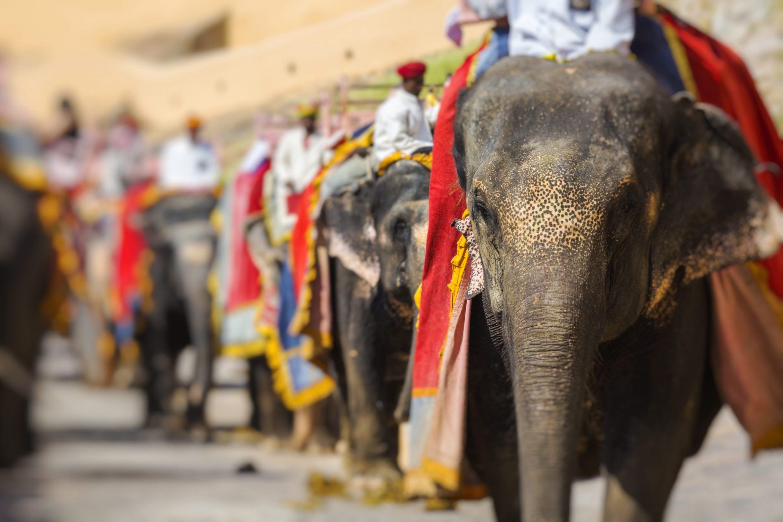 India - Elephants at Amber Fort in Jaipur