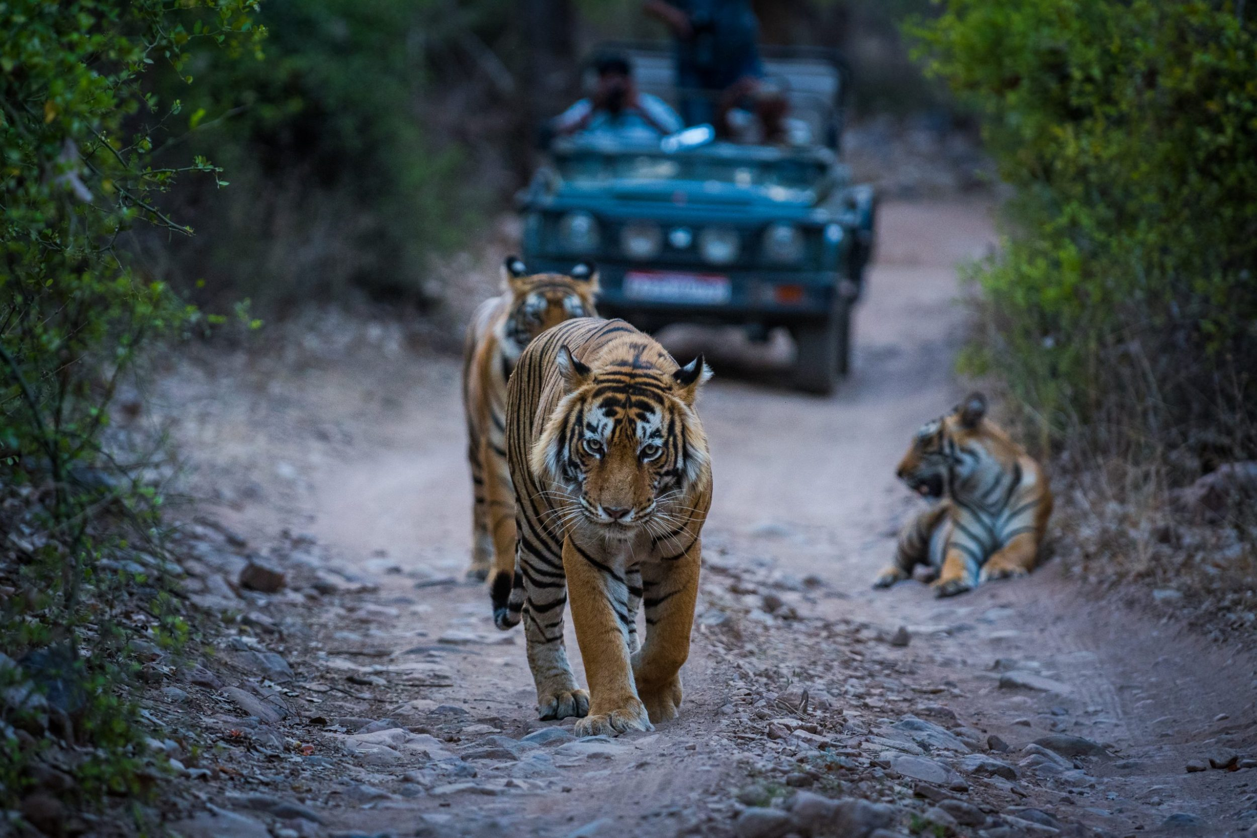 India - Ranthambore Tiger Reserve