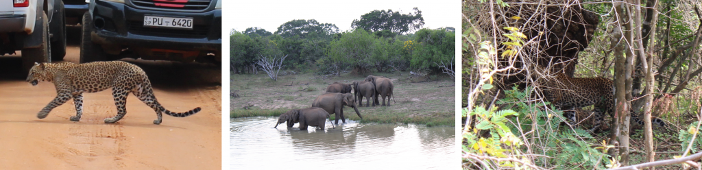 Wild Coast Tented Lodge - Safari Tour